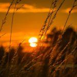 Sonnenuntergang Feldmark