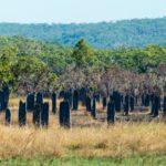 Termitenbauten