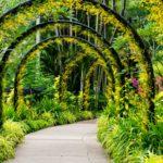 Torbogen im Orchideengarten
