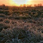Frostiges Feld im Sonnenaufgang